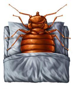 Bedbug resting on a pillow